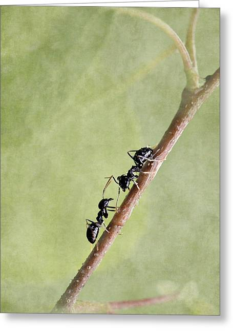Forest Floor Mixed Media Greeting Cards - Ant Greeting Card by Heike Hultsch