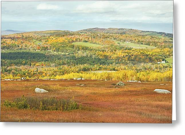 Blue Mountains Red Greeting Cards - Autumn Colors In Maine Blueberry Field And Forest Greeting Card by Keith Webber Jr