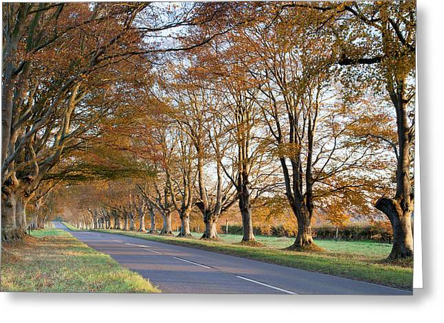 Changing Colour Greeting Cards - Autumn Colours Greeting Card by Ollie Taylor