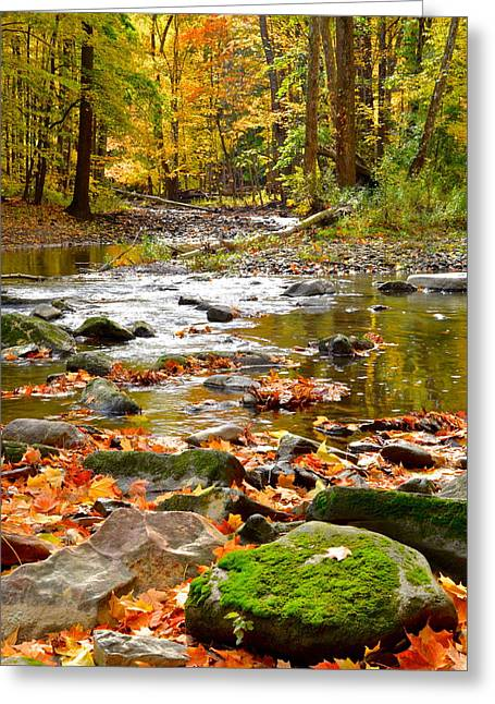 Marvelous View Greeting Cards - Autumn Stream Greeting Card by Frozen in Time Fine Art Photography