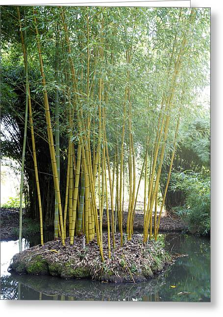 Green Bamboo Greeting Cards - Bamboo Greeting Card by Les Cunliffe