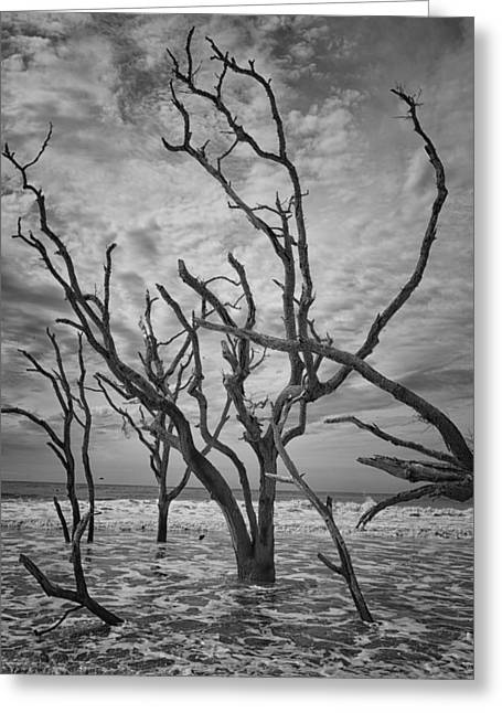 Mccoy Greeting Cards - Botany Bay Beach Greeting Card by A Different Brian Photography