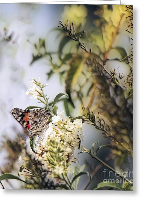 Pen Greeting Cards - Butterfly Greeting Card by Laura L Leatherwood