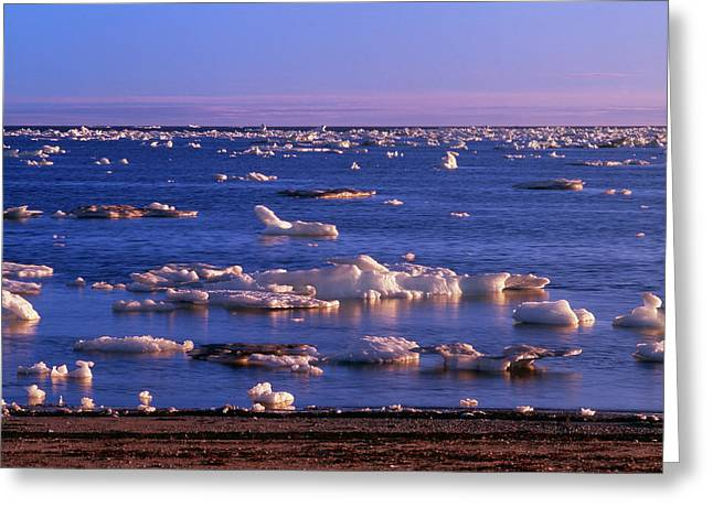 Canada, Manitoba, Churchill, Ice Floe Greeting Card by Jaynes Gallery