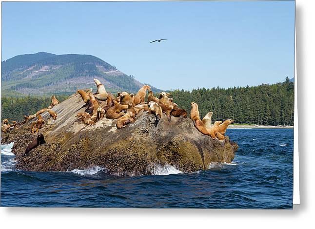 Canada, Pacific Rim National Park Greeting Card by Jamie and Judy Wild