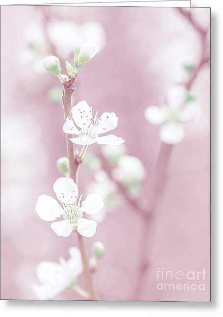 Fruit Tree Art Greeting Cards - Cherry tree blossom Greeting Card by Anna Omelchenko
