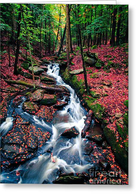 Waterfall Greeting Cards - Chesterfield Gorge New Hampshire Greeting Card by Edward Fielding