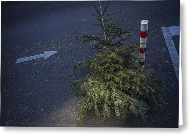 Christmas Tree Unadorned On The Street Greeting Card by Thomas Olbrich