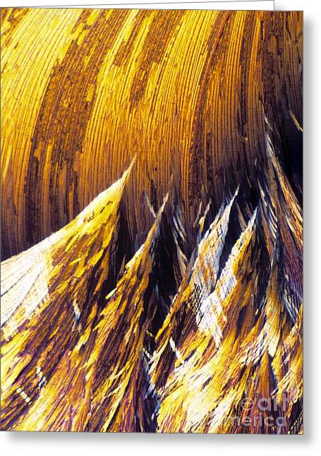 Corticosteroid Greeting Cards - Cortisol Crystals, Light Micrograph Greeting Card by David Parker