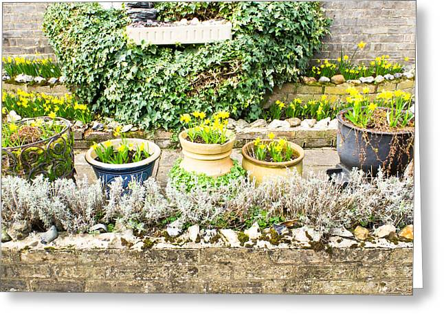 Flowerpots Greeting Cards - Daffodils Greeting Card by Tom Gowanlock