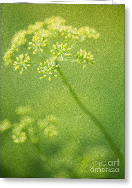 Commercial Photography Greeting Cards - Dill Flower Greeting Card by Iris Richardson