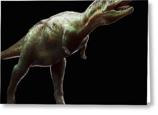 Evolved Greeting Cards - Dinosaur Aucasaurus Greeting Card by Science Picture Co