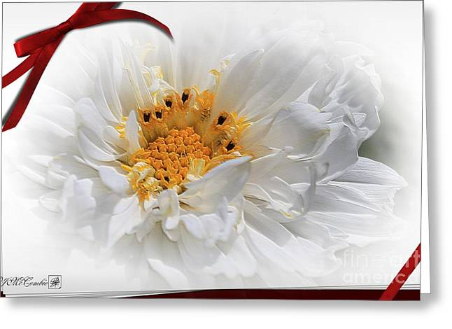 Aster Mixed Media Greeting Cards - Double Click Cosmos named Snow Puff Greeting Card by J McCombie
