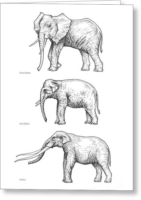Elephant Evolution, Artwork Greeting Card by Gary Hincks