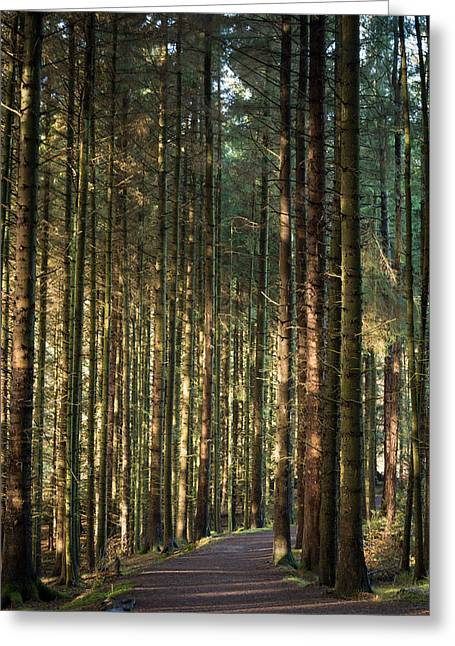 Forest Greeting Cards - Entwistle Forest. Greeting Card by Daniel Kay