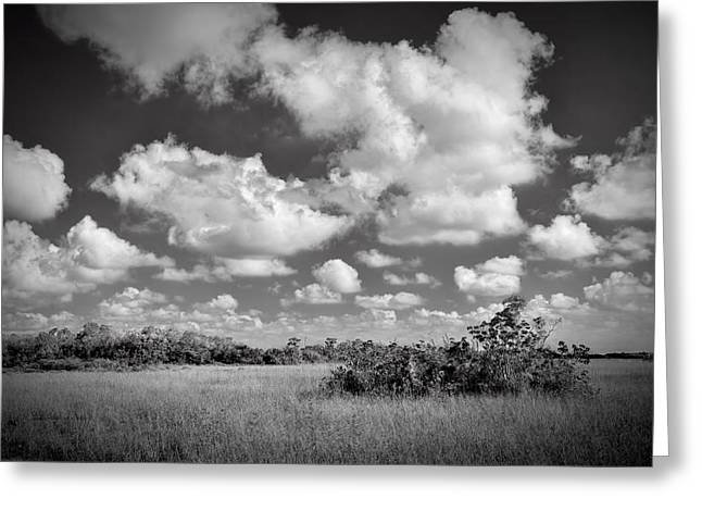 Deep Blue River Greeting Cards - Everglades LandscapeBW-5 Greeting Card by Rudy Umans