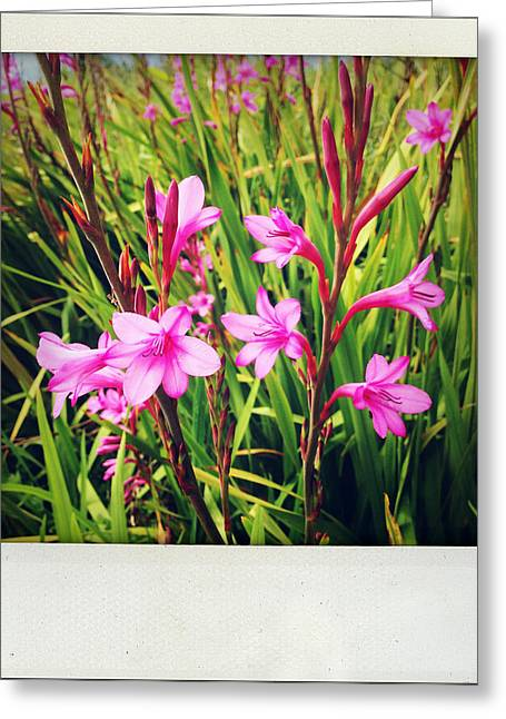 Pink Blossoms Greeting Cards - Flowers Greeting Card by Les Cunliffe