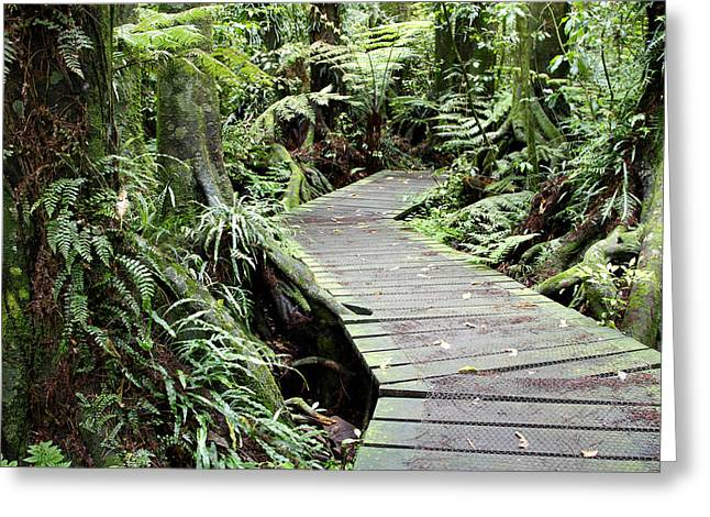 Boardwalk Greeting Cards - Forest Greeting Card by Les Cunliffe