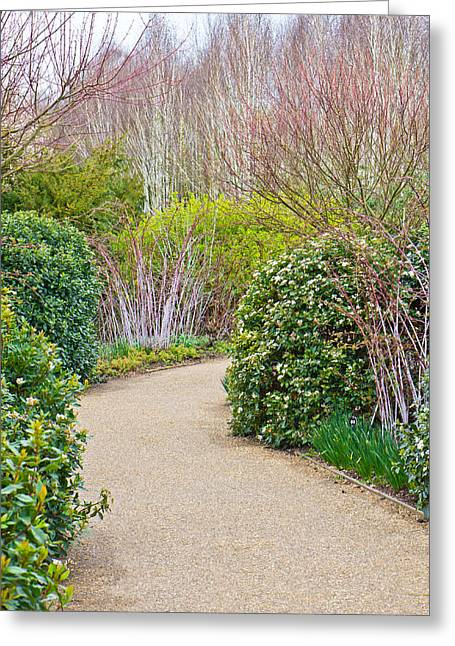 Maze Greeting Cards - Garden path Greeting Card by Tom Gowanlock