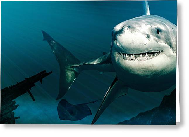 White Shark Greeting Cards - Great White Warrior Greeting Card by Dancin Artworks