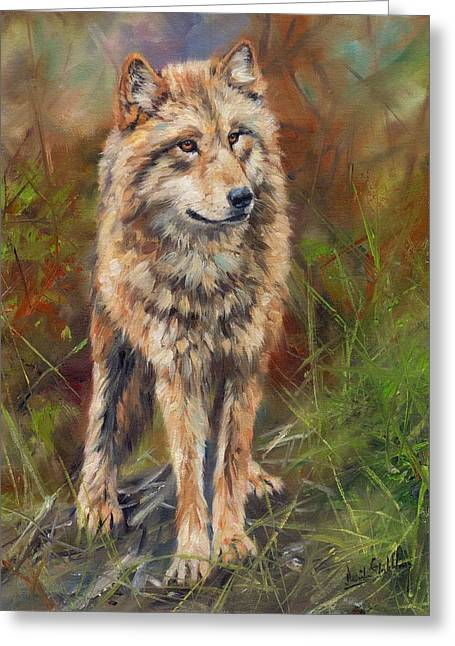 Wolves Greeting Cards - Grey Wolf Greeting Card by David Stribbling