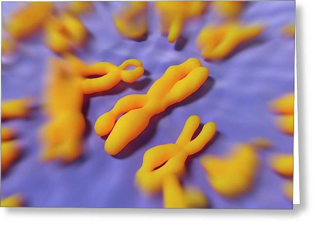 Human Chromosomes Greeting Card by Alfred Pasieka