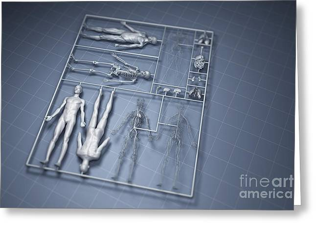 Plastic Models Greeting Cards - Human Cloning Greeting Card by Science Picture Co