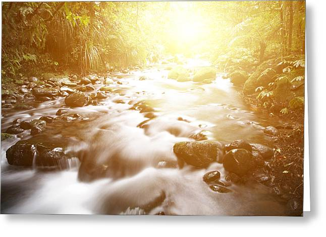 Tropical Photographs Greeting Cards - Jungle stream Greeting Card by Les Cunliffe