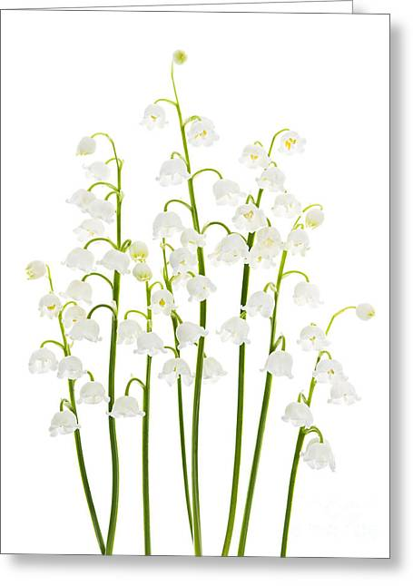 White Photographs Greeting Cards - Lily-of-the-valley flowers  Greeting Card by Elena Elisseeva