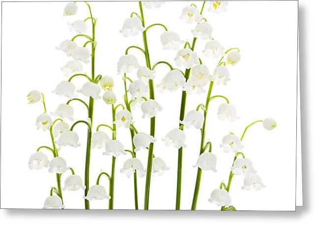 Lily-of-the-valley flowers  Greeting Card by Elena Elisseeva