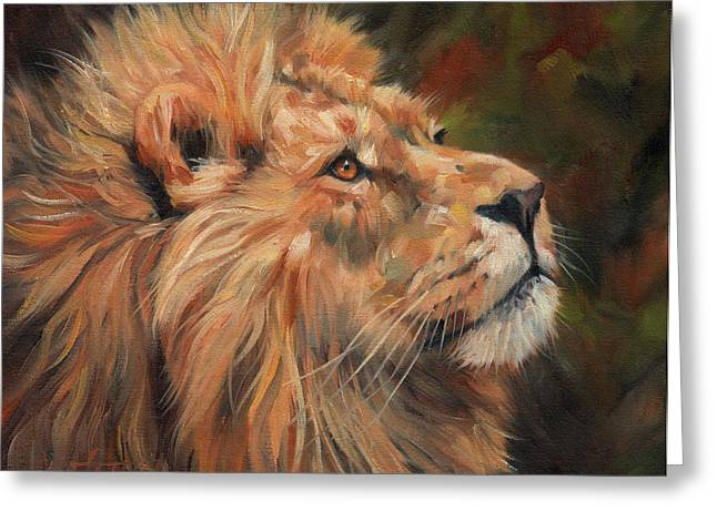 Lions Greeting Cards - Lion Greeting Card by David Stribbling