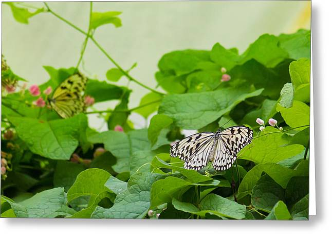 Macro Butterfly Greeting Card by Akash Routh