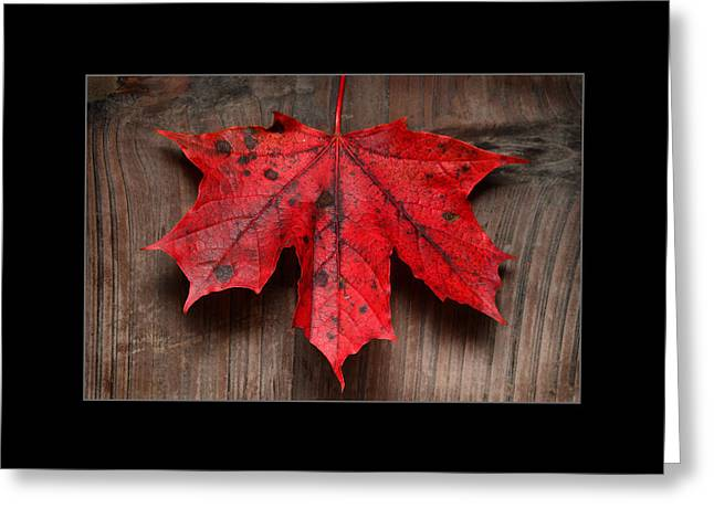 Yardwork Greeting Cards - Maple Leafs Greeting Card by Toppart Sweden