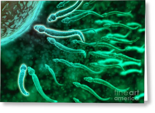 Fertilization Digital Art Greeting Cards - Microscopic View Of Sperm Swimming Greeting Card by Stocktrek Images