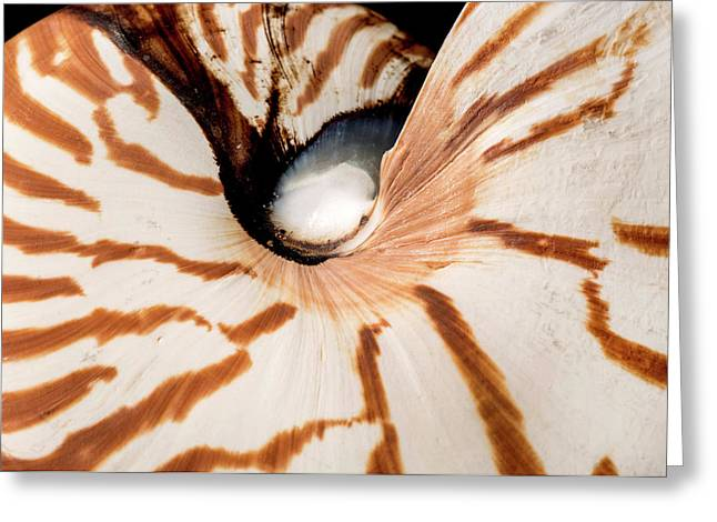 Nautilus Pompilius Greeting Card by Natural History Museum, London