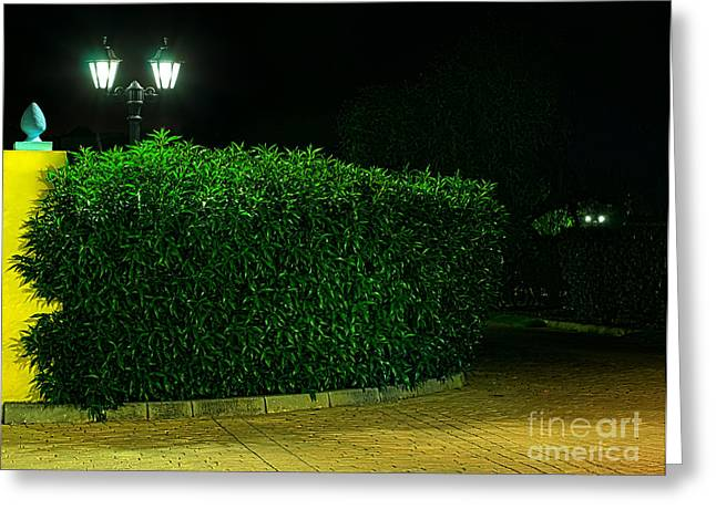 Illuminate Greeting Cards - Night picture of the lamp in the park.  Greeting Card by Deyan Georgiev