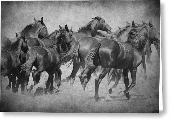 Horse In Water Paint Greeting Cards - On the Run Greeting Card by Steve McKinzie