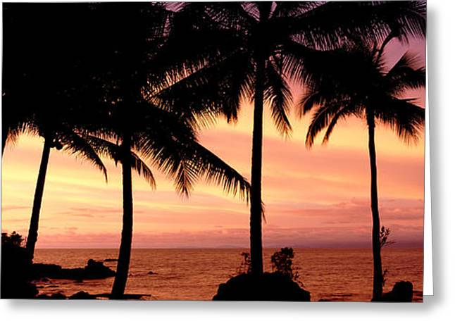 Colombia Greeting Cards - Palm Trees On The Coast, Colombia Greeting Card by Panoramic Images
