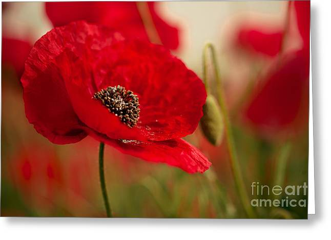 Field. Cloud Greeting Cards - Poppy Dream Greeting Card by Nailia Schwarz