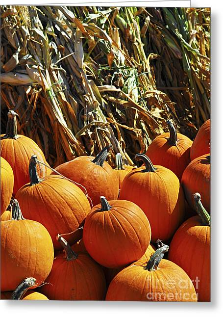 Orange Pumpkin Greeting Cards - Pumpkins Greeting Card by Elena Elisseeva