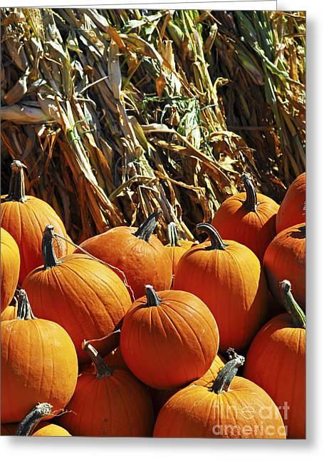 Pumpkins Greeting Card by Elena Elisseeva