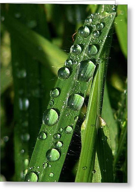 Rain Drop Greeting Cards - Raindrops Greeting Card by Carol Lynch