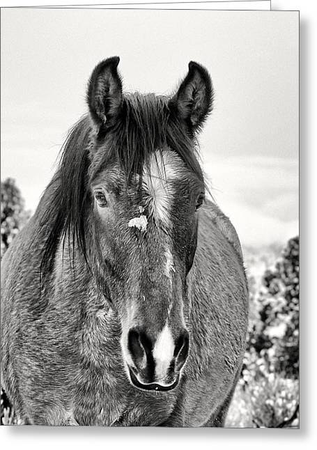 Art For Sanctuaries Greeting Cards - 5. Rebel At Wynema Ranch Wild Horse Sanctuary Greeting Card by Maria Jansson