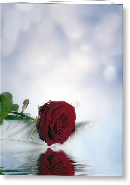 Flower Blooms Greeting Cards - Red Rose Greeting Card by Joana Kruse