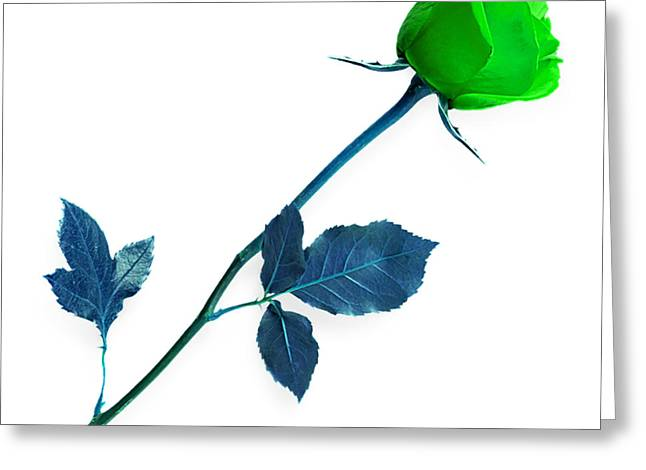 Valentine Greeting Cards - Rose Collection Greeting Card by Marvin Blaine