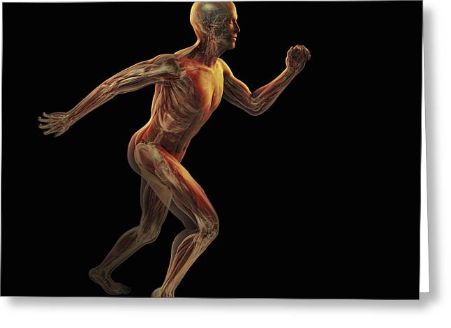 Physical Body Greeting Cards - Running Male Figure Greeting Card by Science Picture Co