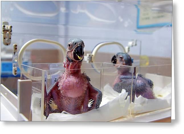 Safari Park Animal Hospital Greeting Card by Pan Xunbin