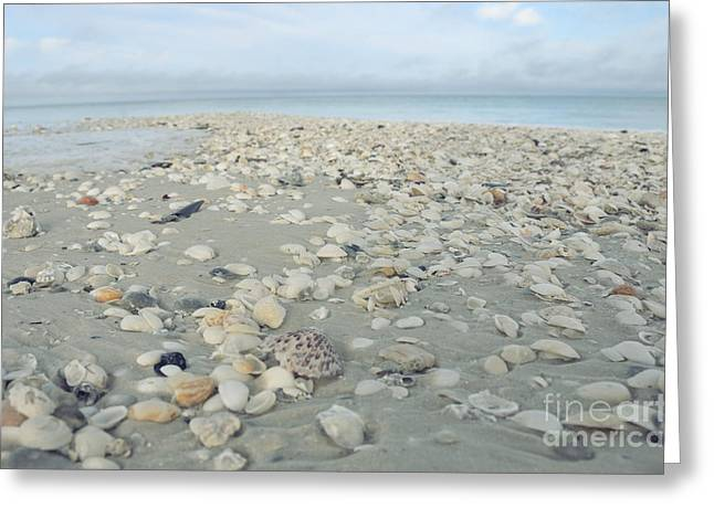 Variety Of Shells Greeting Cards - Sea Shells on Marco Island Greeting Card by Birgit Tyrrell