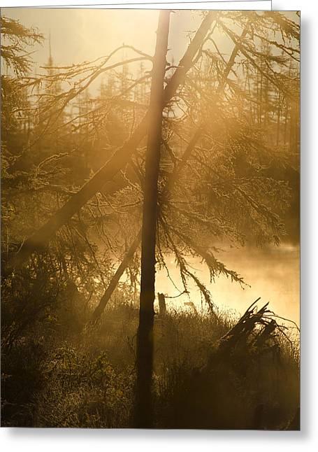 Print Photographs Greeting Cards - Siberian Sunrise Greeting Card by Mark Dornblaser