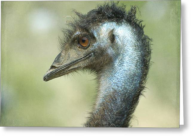 Emu Greeting Cards - Sideways Greeting Card by Fraida Gutovich